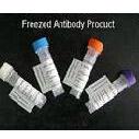 """Fibulin-5 抗""""衰老关键蛋白""""抗体"""